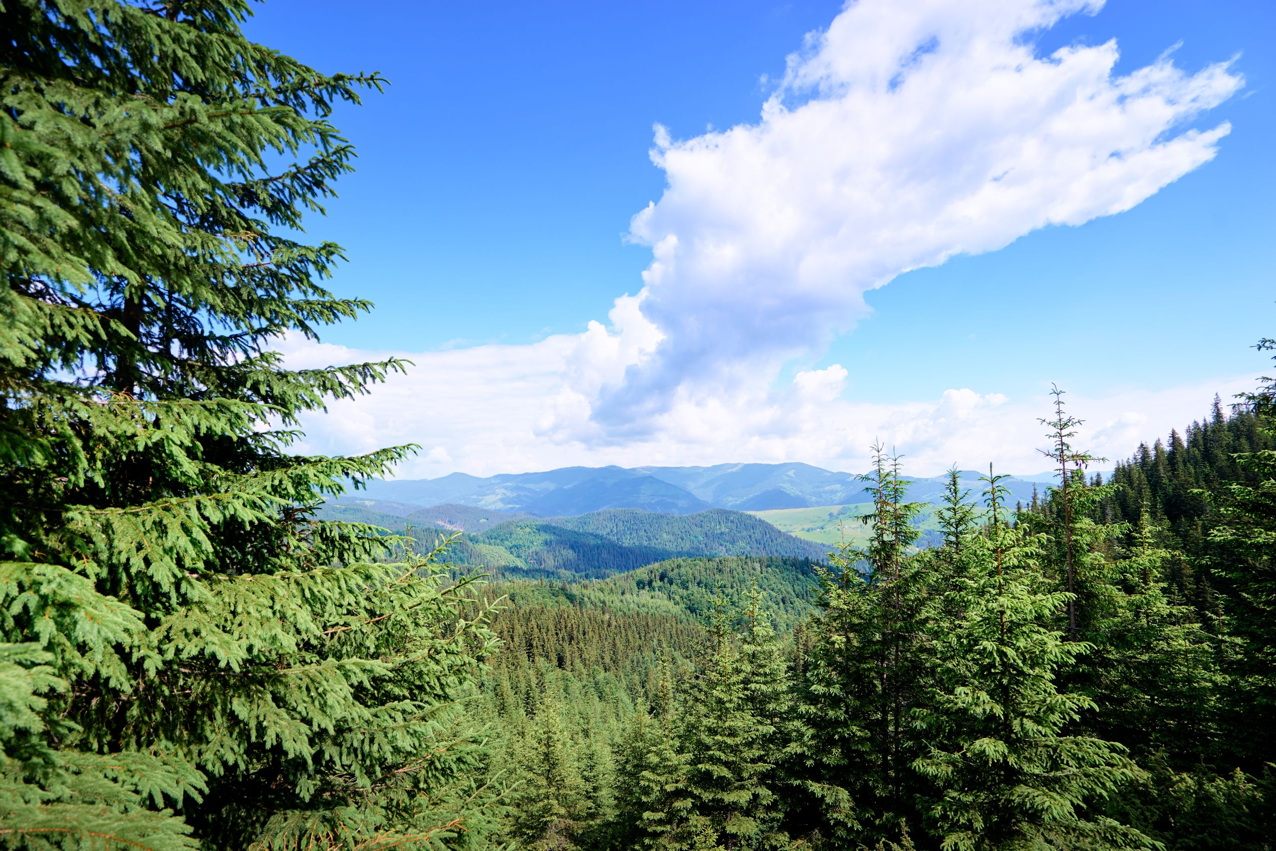Carpathian mountain forests, Ukraine © Shutterstock