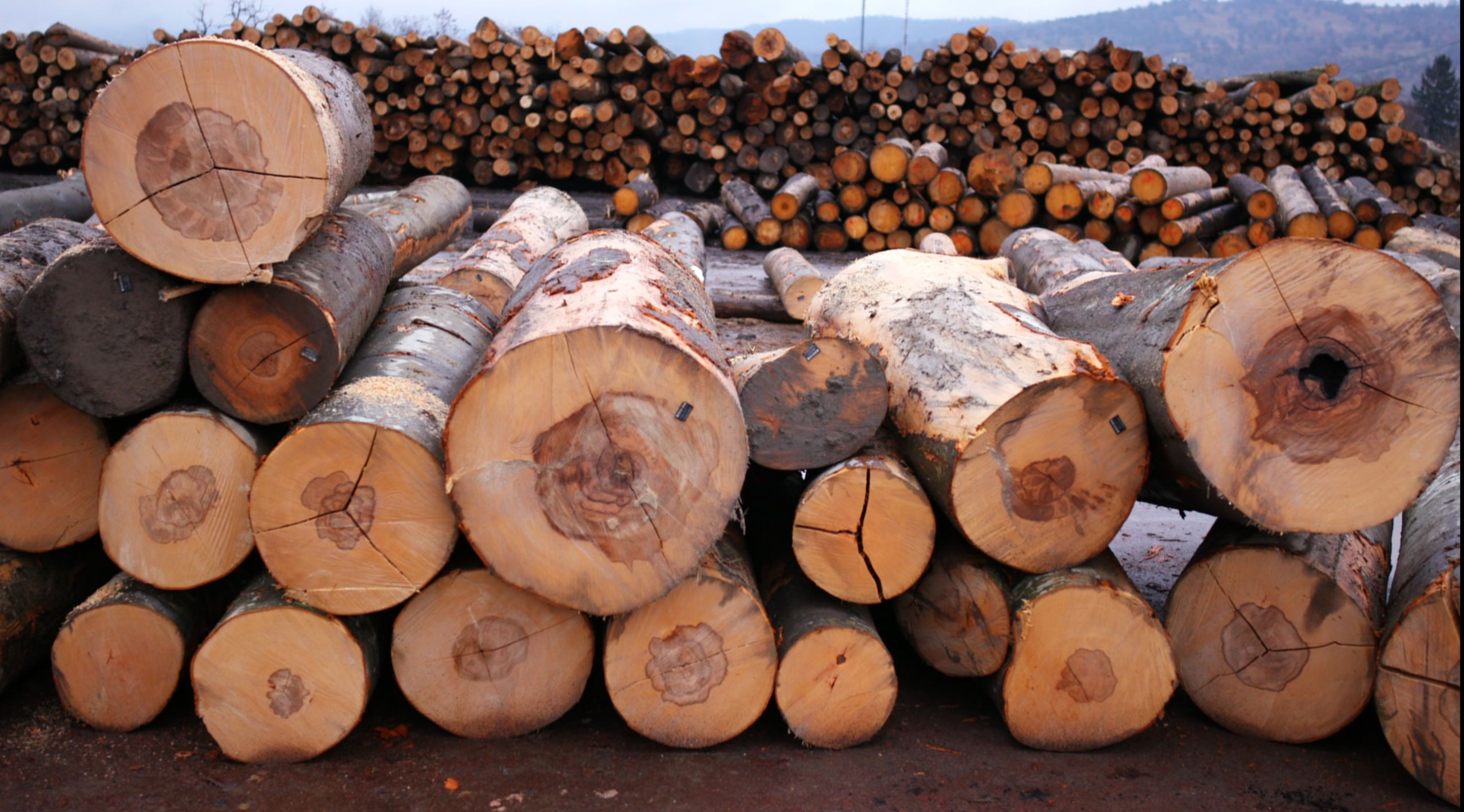 Logs waiting to be processed at VGSM © Jeremy Bristow