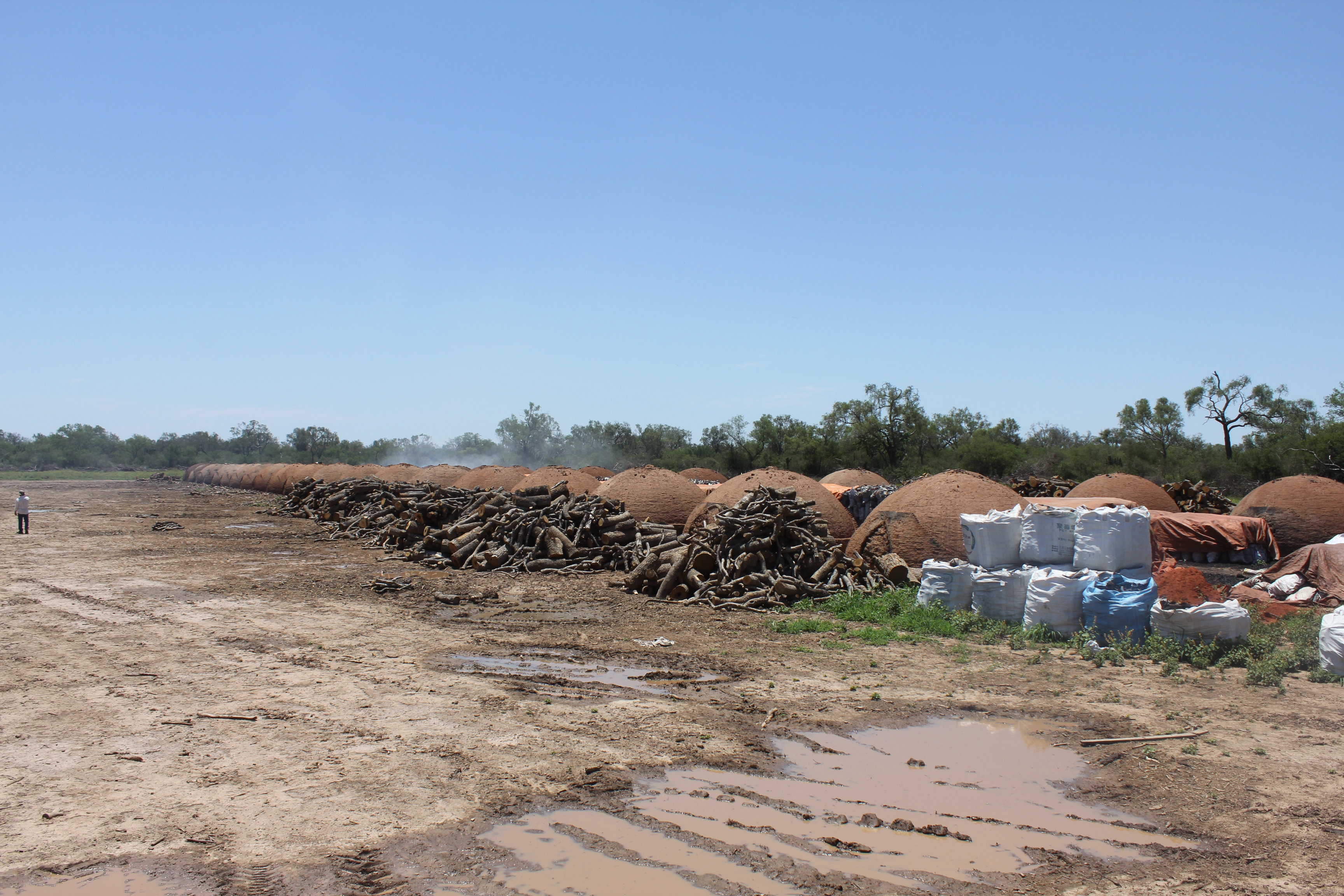 Earthsight's report linked European and US BBQ charcoal to a hidden deforestation crisis in Paraguay. Photo: Earthsight